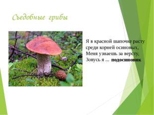 Съедобные грибы Я в красной шапочке расту среди корней осиновых, Меня узнаешь
