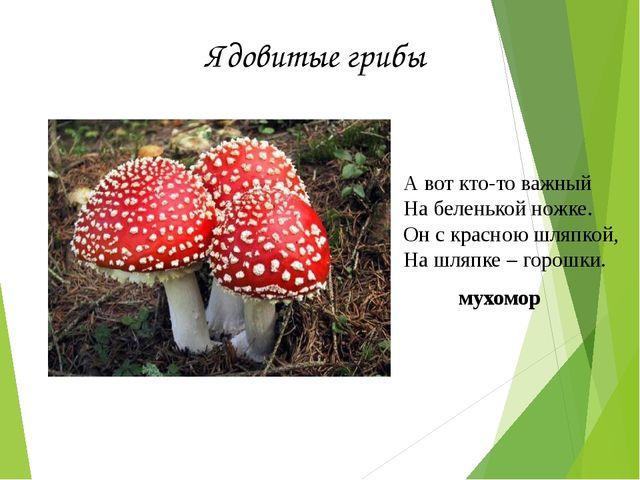 Ядовитые грибы А вот кто-то важный На беленькой ножке. Он с красною шляпкой,...