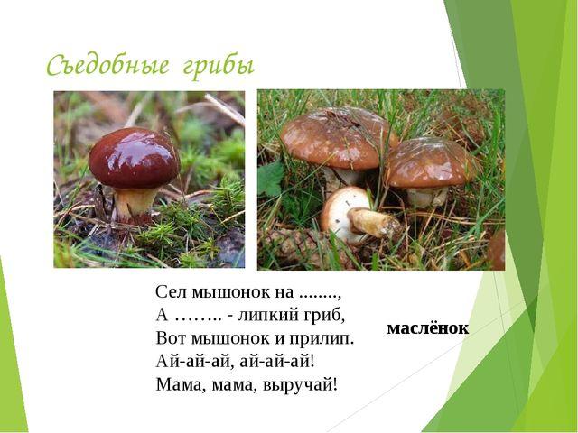 Съедобные грибы Сел мышонок на ........, А …….. - липкий гриб, Вот мышонок и...
