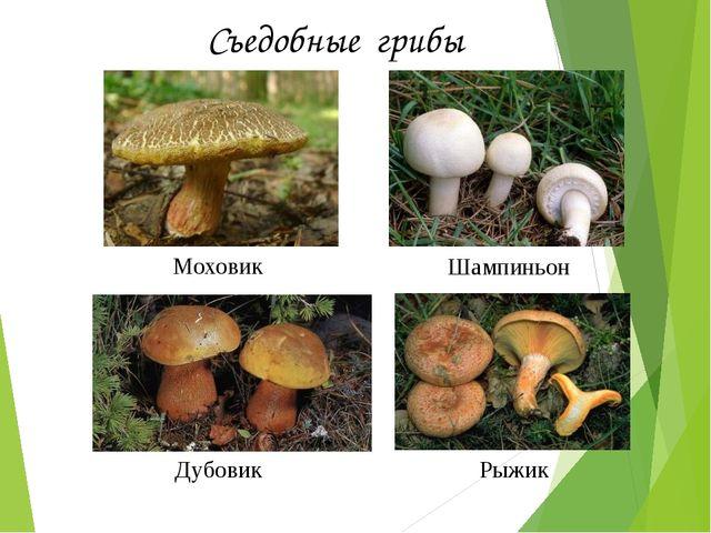 Съедобные грибы Моховик Дубовик Шампиньон Рыжик