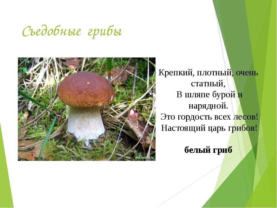 Съедобные грибы Крепкий, плотный, очень статный, В шляпе бурой и нарядной. Эт...