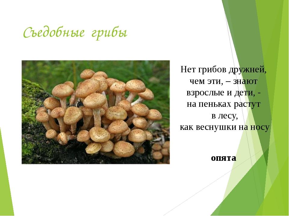 Съедобные грибы Нет грибов дружней, чем эти, – знают взрослые и дети, - на пе...