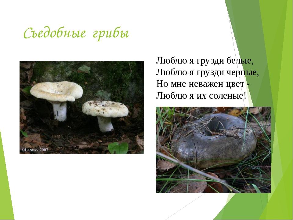 Съедобные грибы Люблю я грузди белые, Люблю я грузди черные, Но мне неважен ц...