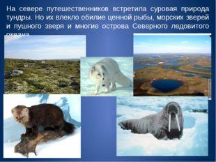 На севере путешественников встретила суровая природа тундры. Но их влекло оби