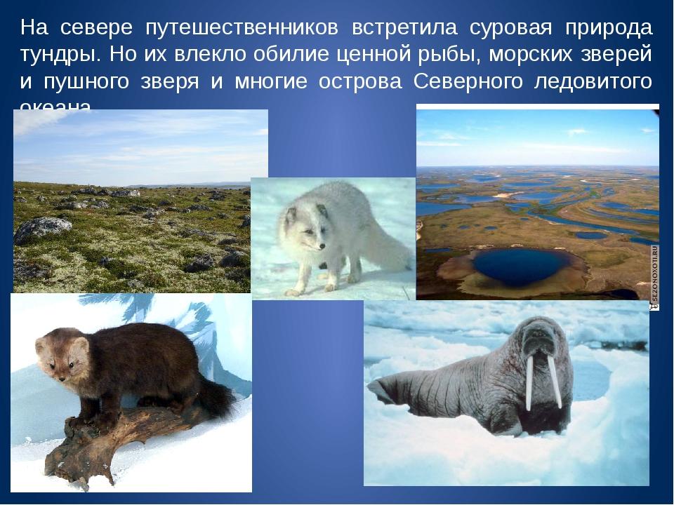 На севере путешественников встретила суровая природа тундры. Но их влекло оби...