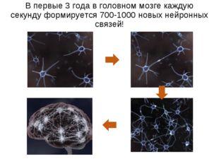 В первые 3 года в головном мозге каждую секунду формируется 700-1000 новых не
