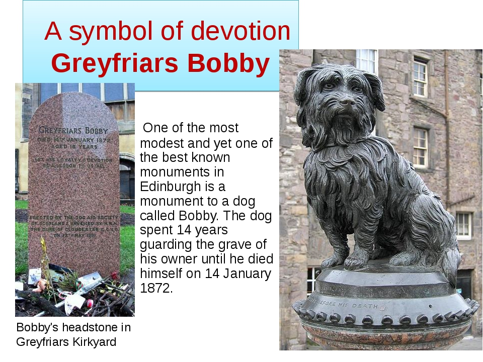 A symbol of devotion Greyfriars Bobby One of the most modest and yet one of...