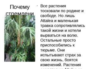 Почему стремление пальмы к свободе не нашло поддержки у других деревьев? Все