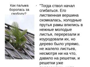 """Как пальма боролась за свободу? """"Тогда ствол начал сгибаться. Его лиственная"""