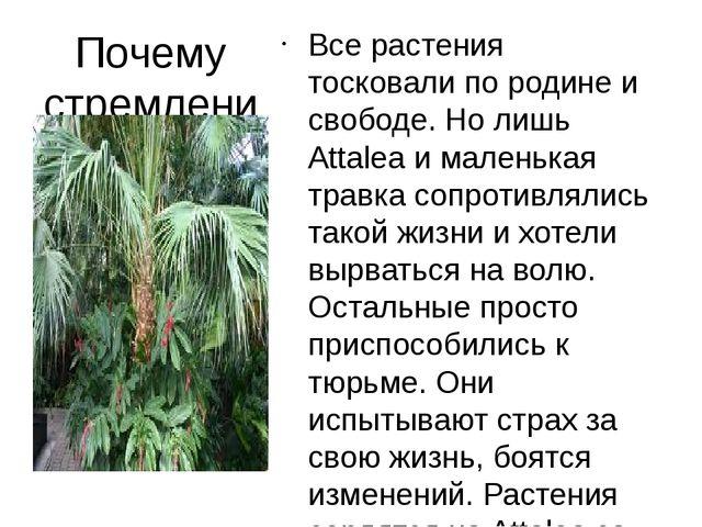 Почему стремление пальмы к свободе не нашло поддержки у других деревьев? Все...