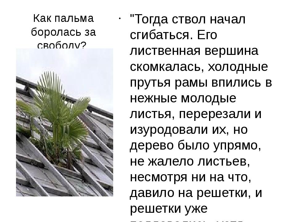 """Как пальма боролась за свободу? """"Тогда ствол начал сгибаться. Его лиственная..."""