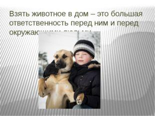 Взять животное в дом – это большая ответственность перед ним и перед окружающ