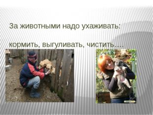 За животными надо ухаживать: кормить, выгуливать, чистить….