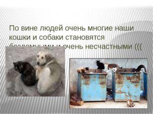 По вине людей очень многие наши кошки и собаки становятся бездомными и очень