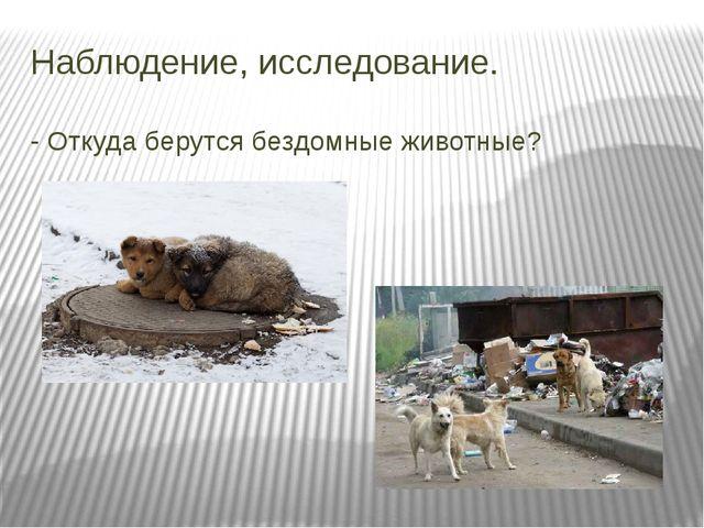 Наблюдение, исследование. - Откуда берутся бездомные животные?
