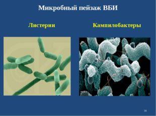Микробный пейзаж ВБИ Листерии Кампилобактеры *