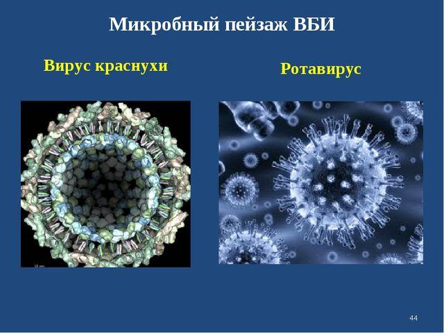 Микробный пейзаж ВБИ Вирус краснухи Ротавирус *
