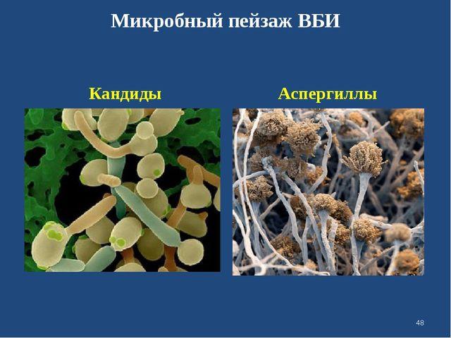 Микробный пейзаж ВБИ Кандиды Аспергиллы *