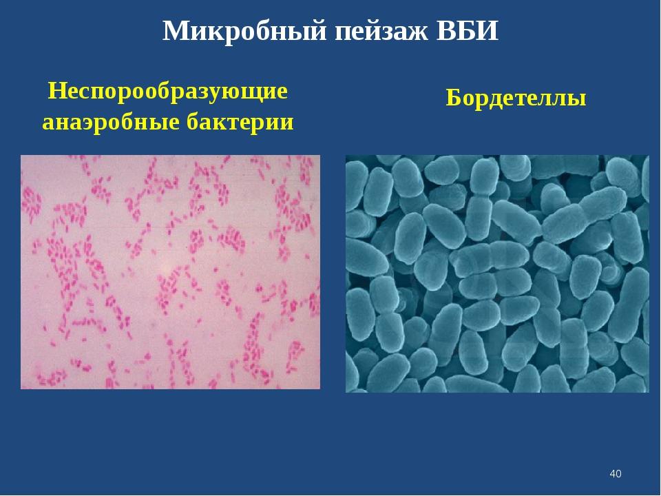 Микробный пейзаж ВБИ Неспорообразующие анаэробные бактерии Бордетеллы *