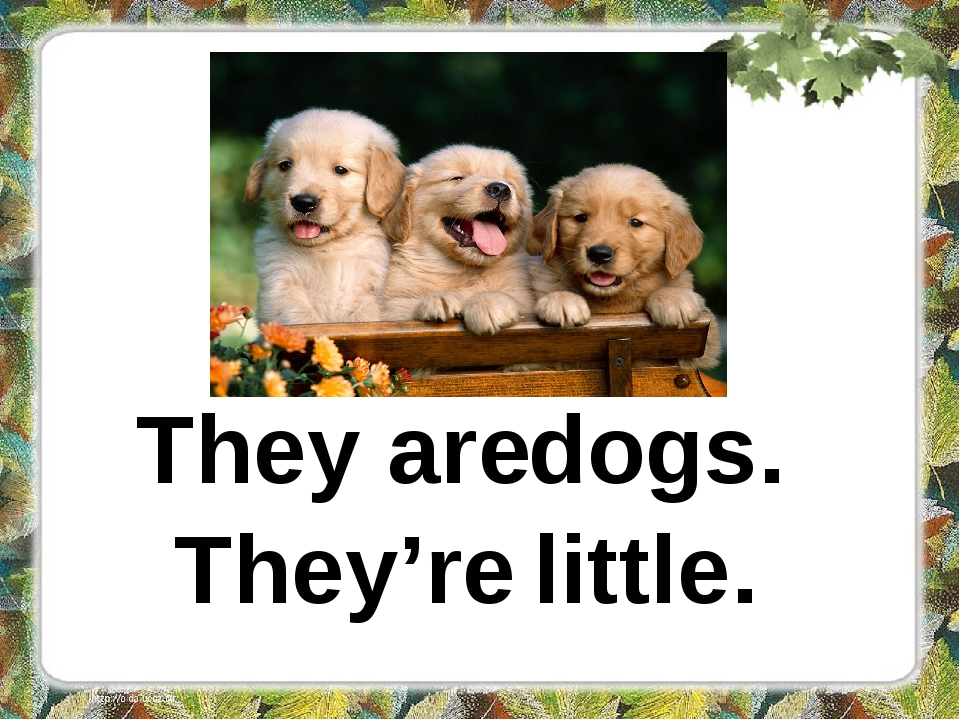 They are dogs. They're little.