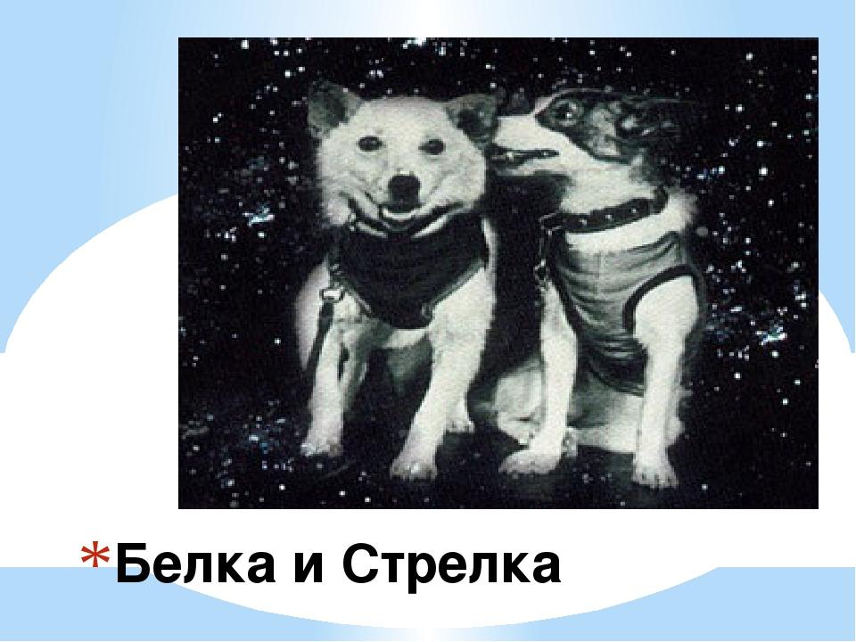 Белка и Стрелка