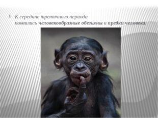 К середине третичного периода появилисьчеловекообразные обезьяныипредки че