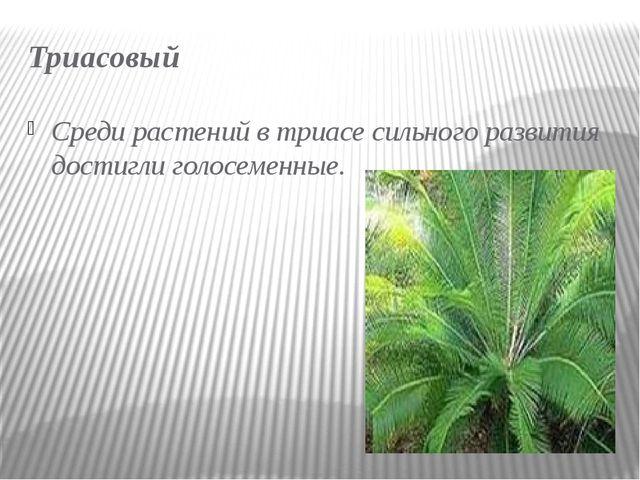 Триасовый Среди растений в триасе сильного развития достиглиголосеменные.