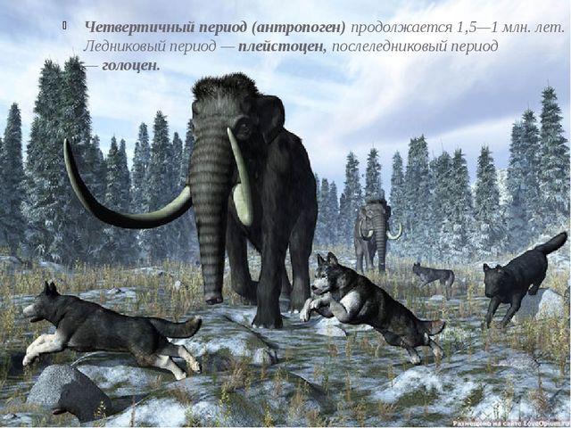 Четвертичный период(антропоген)продолжается1,5—1млн. лет. Ледниковый пери...