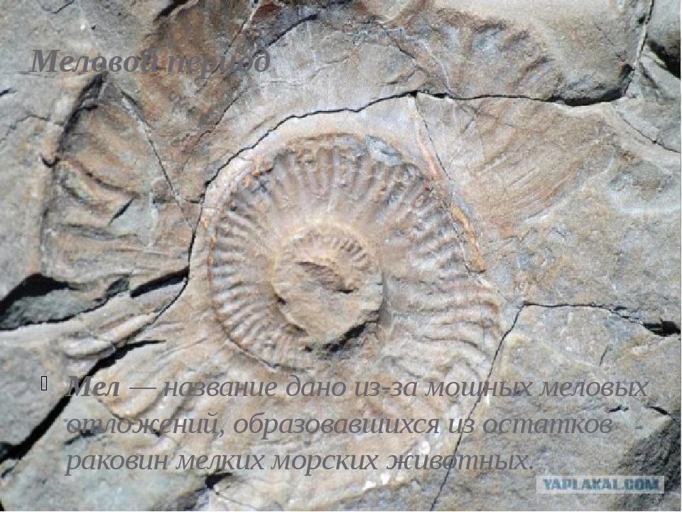 Меловой период Мел— название дано из-за мощных меловых отложений, образовавш...