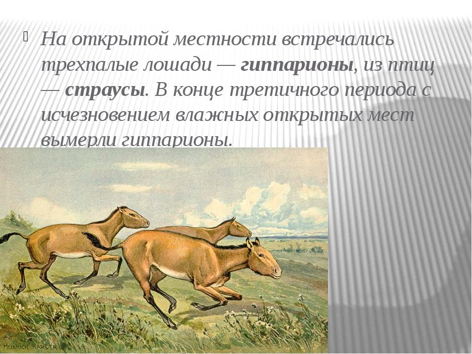 На открытой местности встречались трехпалые лошади —гиппарионы,из птиц —ст...
