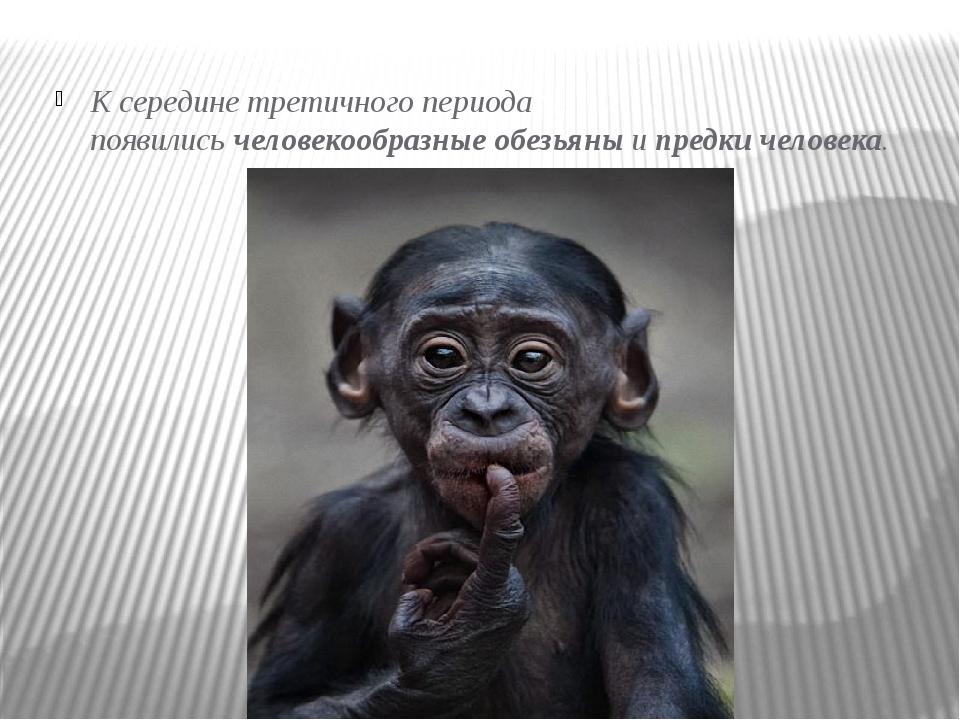 К середине третичного периода появилисьчеловекообразные обезьяныипредки че...
