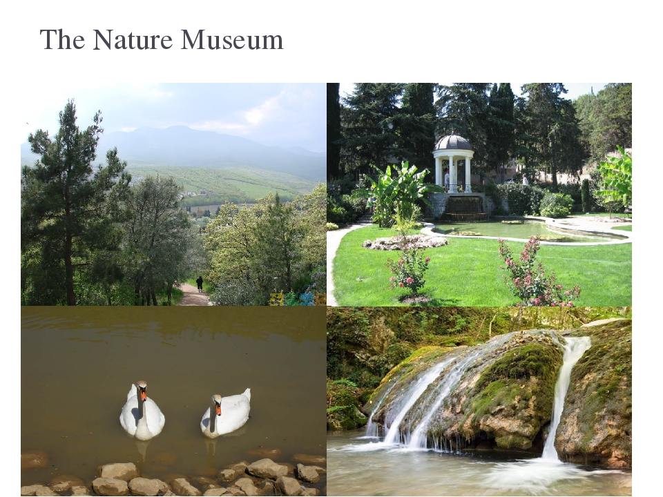 The Nature Museum