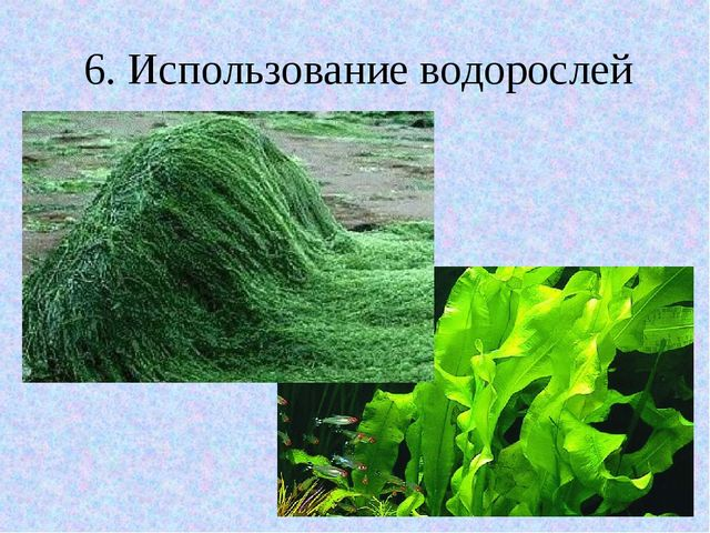 6. Использование водорослей