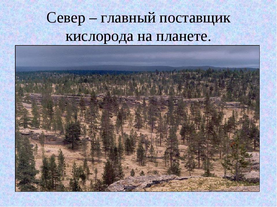 Север – главный поставщик кислорода на планете.