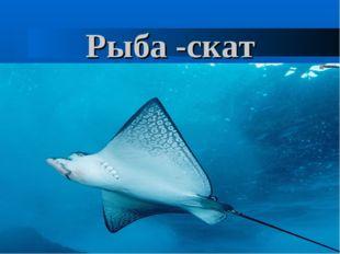Рыба -скат