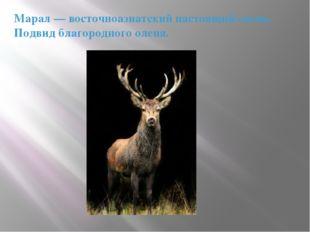 Марал— восточноазиатский настоящий олень. Подвид благородного оленя.