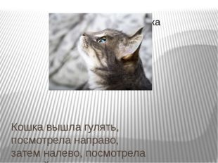 Кошка вышла гулять, посмотрела направо, затем налево, посмотрела на свой хвос