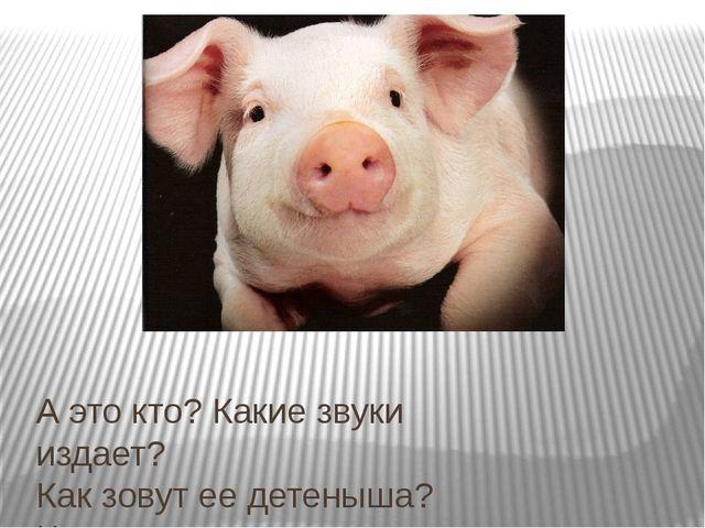 А это кто? Какие звуки издает? Как зовут ее детеныша? Что дает человеку свинья?