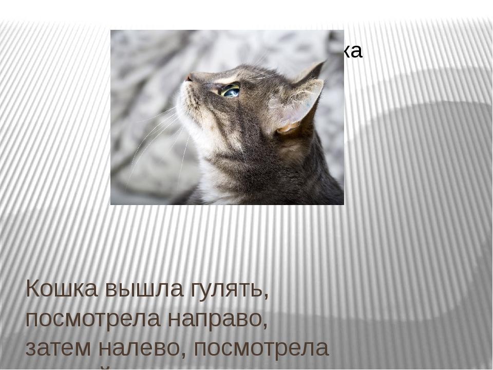 Кошка вышла гулять, посмотрела направо, затем налево, посмотрела на свой хвос...
