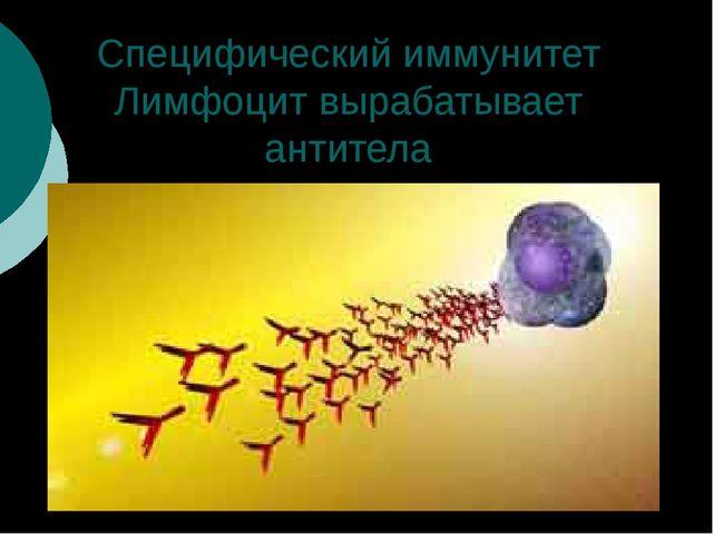 Специфический иммунитет Лимфоцит вырабатывает антитела