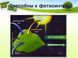 Способны к фотосинтезу