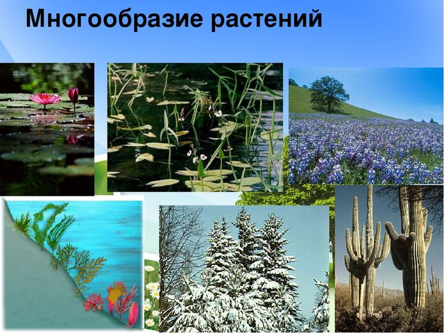Многообразие растений
