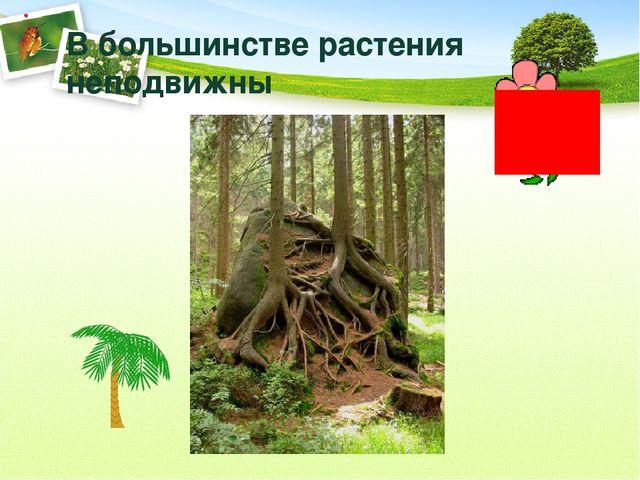 В большинстве растения неподвижны