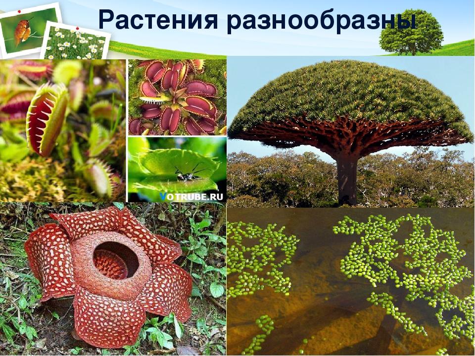 Растения разнообразны