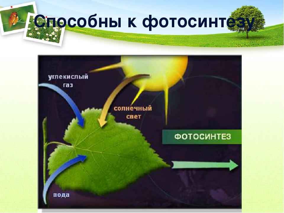 Растения не способные к фотосинтезу
