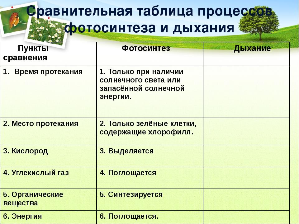 Сравнительная таблица процессов фотосинтеза и дыхания Пункты сравнения Фотоси...