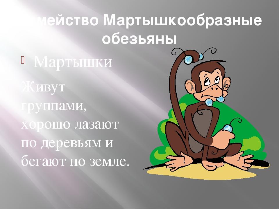 Семейство Мартышкообразные обезьяны Мартышки Живут группами, хорошо лазают по...