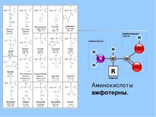 Аминокислоты амфотерны.