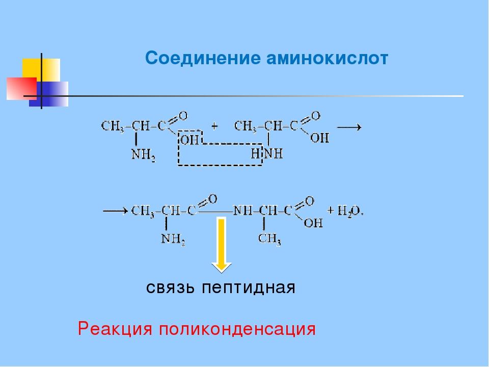 Соединение аминокислот связь пептидная Реакция поликонденсация