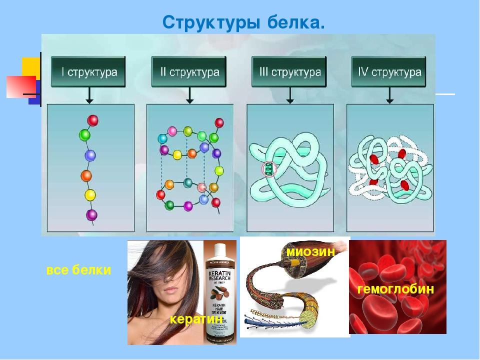 Структуры белка. кератин миозин гемоглобин все белки